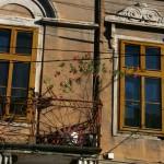 lugoj-balcon-flori