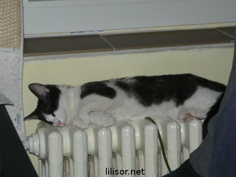 titic dormind pe calorifer