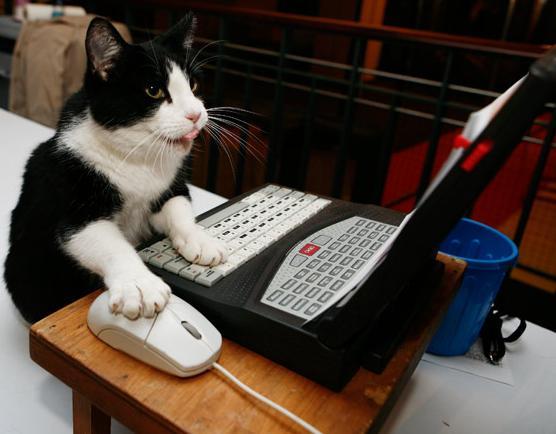 pisica la calculator