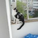 titic pe balcon