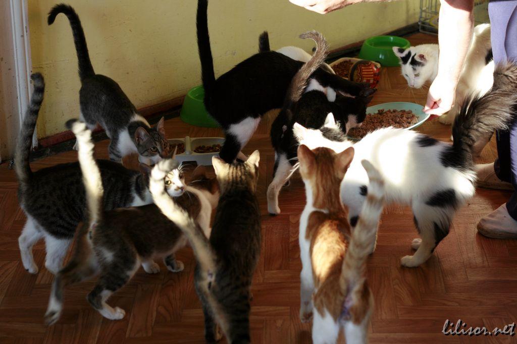 Pisicile din centrul de adopţii Prietenii Pisicilor Oradea