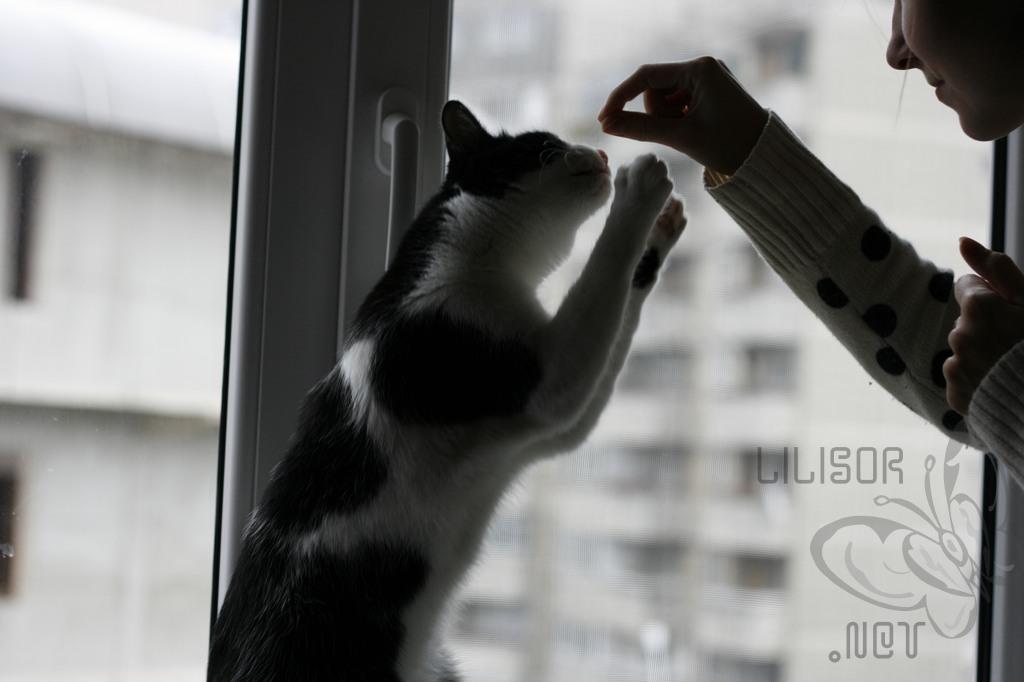 pisica pofticioasa