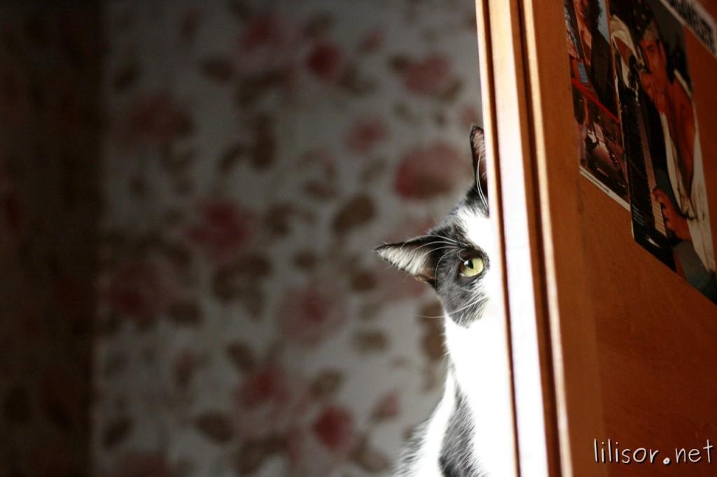 pisica_spioneaza