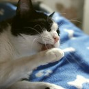 pisica se spala pe labute