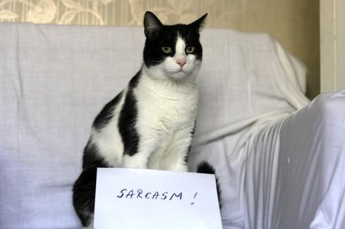 pisica sarcastica