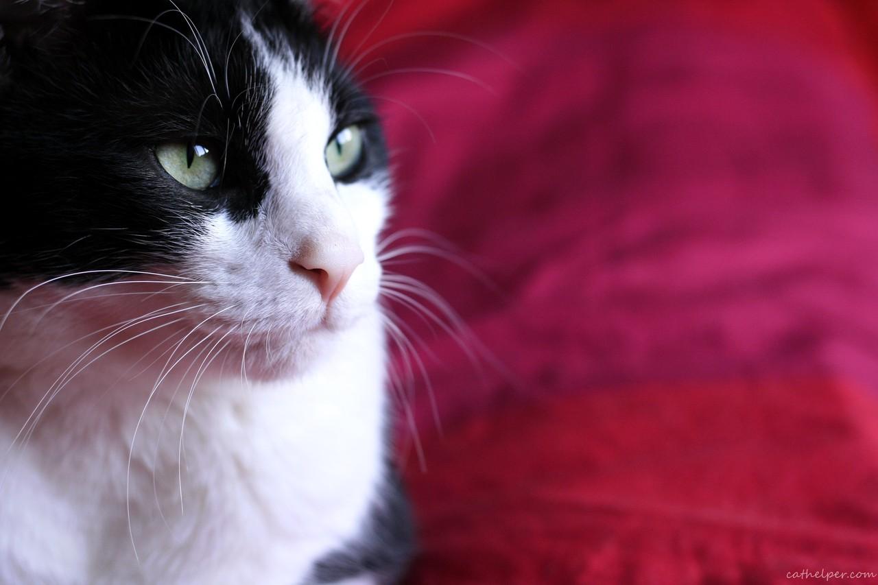Pisicuțele n-ar cumpăra Whiskas!
