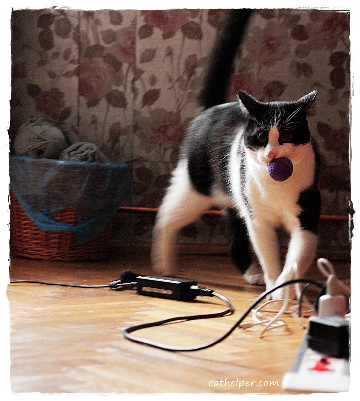 pisica vaneaza din placere