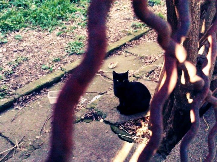 curtea cu pisici