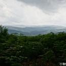 jungla-bihoreana