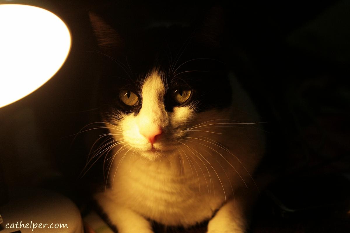 cat-in-light