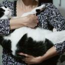 pisica grasuna