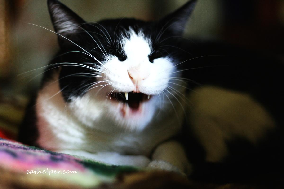 pisica malefica