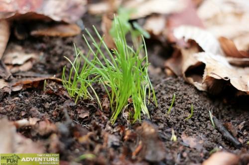 iarba verde din padure