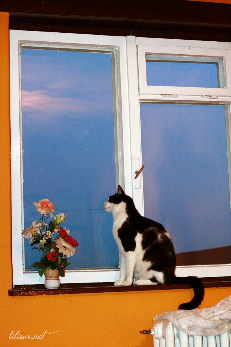 pisica-ticaloasa