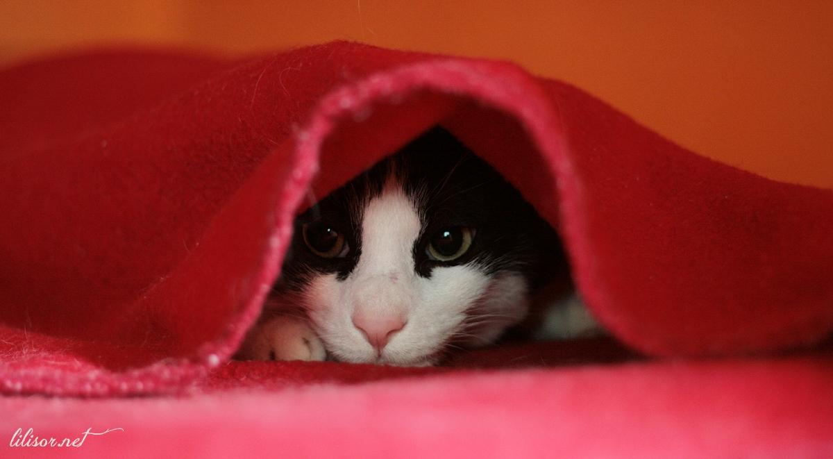 pisica-ascunsa-sub-patura