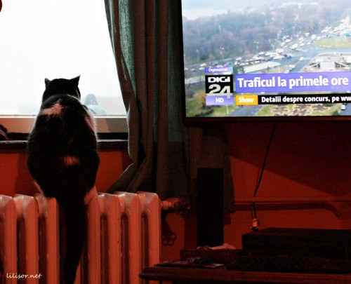 pisica-si-porumbelul