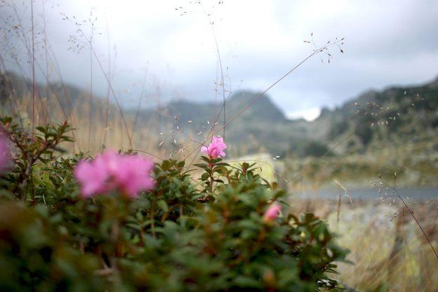flori-lacul-bucura