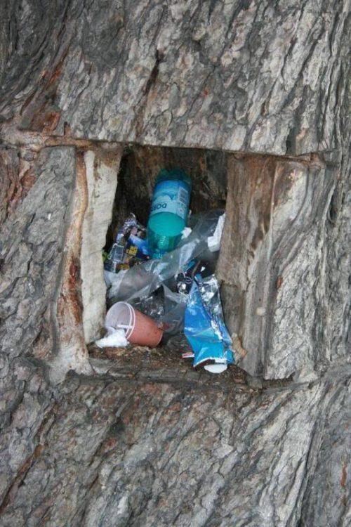 gunoi-in-copac-oradea