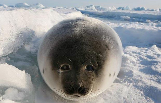 vanatoare-foci