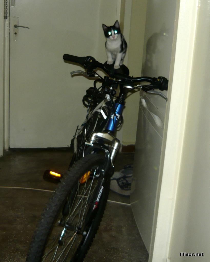 pisica si bicicleta