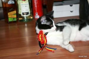 pisica patrioata