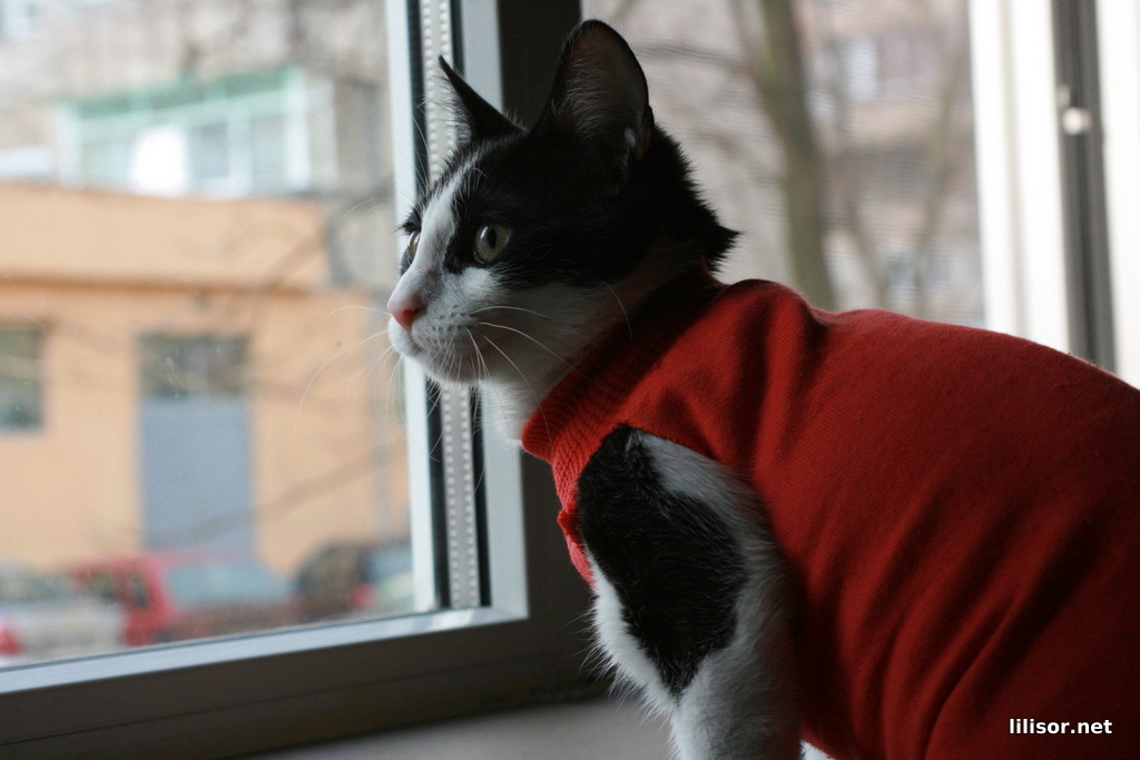 pisica dupa sterilizare