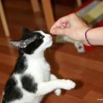 cum ii dai pisicii gustari
