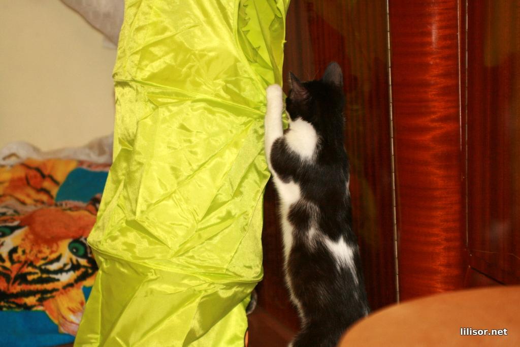 titic si etajera pentru pisici 2