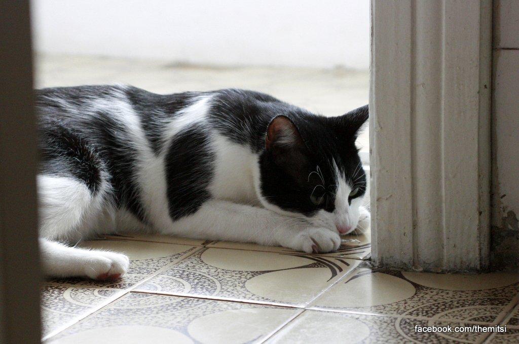 pisica in balcon
