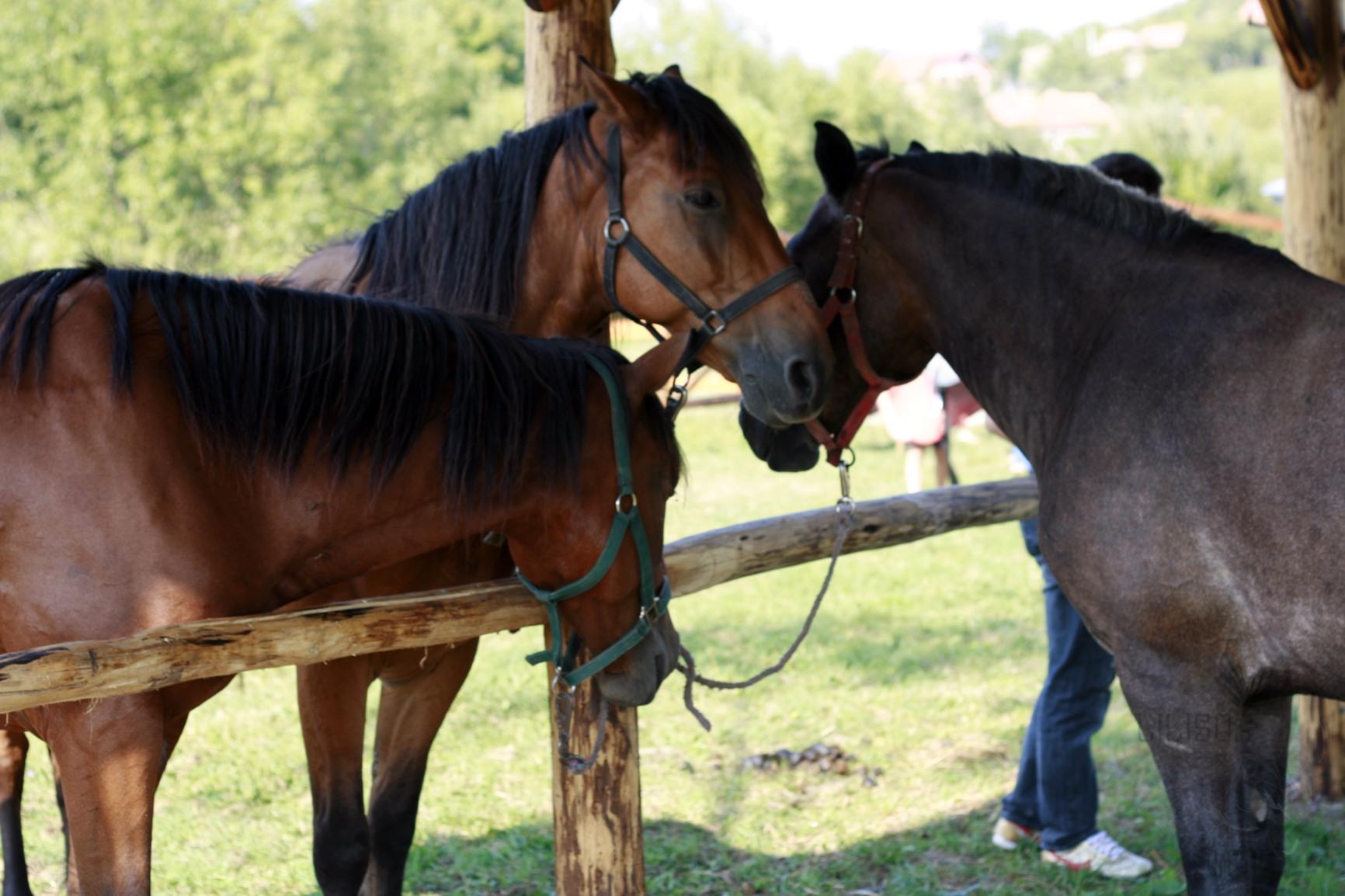 trei cai