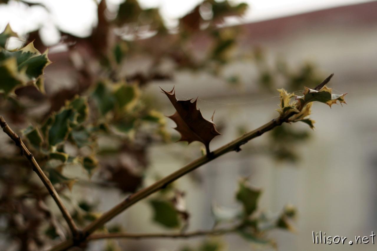 frunze uscate