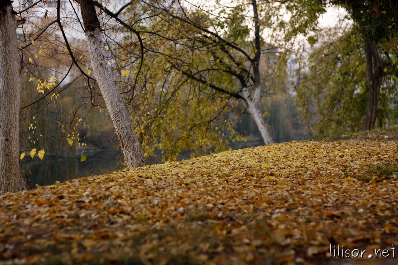 pat de frunze oradea