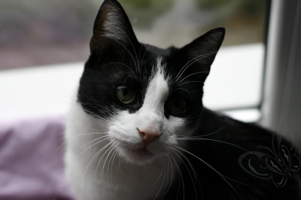 privire de pisica inocenta