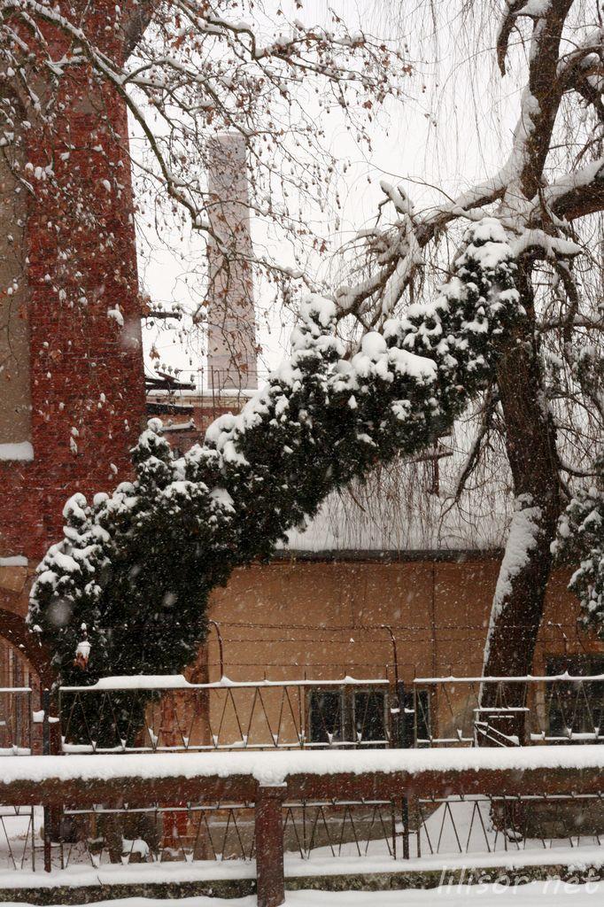 brad nins