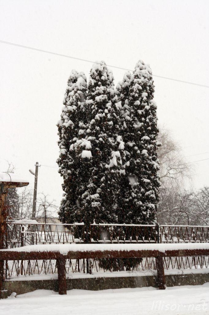 iarna in lugoj