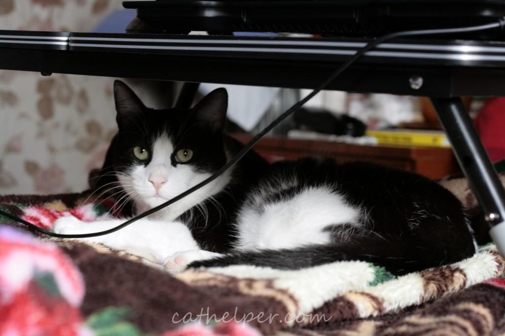 pisica doarme sub masa