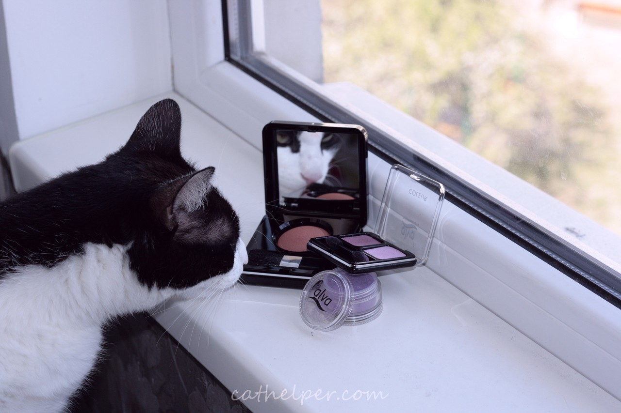 pisica adulmeca farduri de ochi