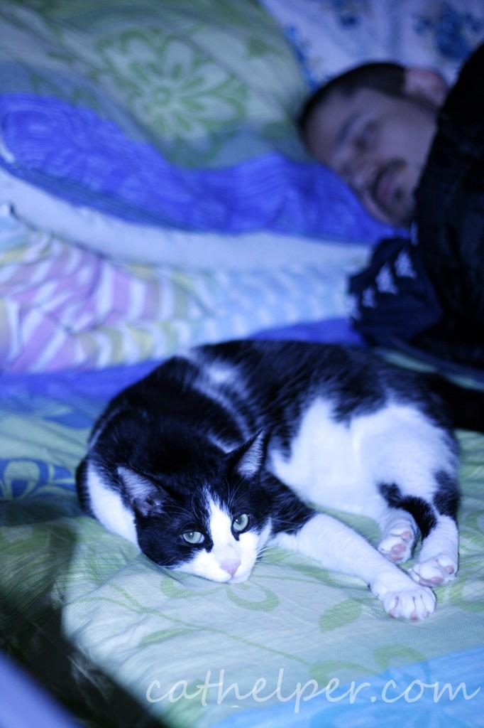 pisica pazeste somnul
