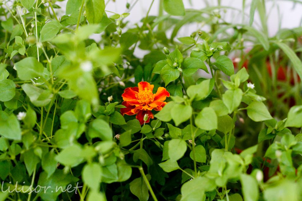 craita intre plante verzi