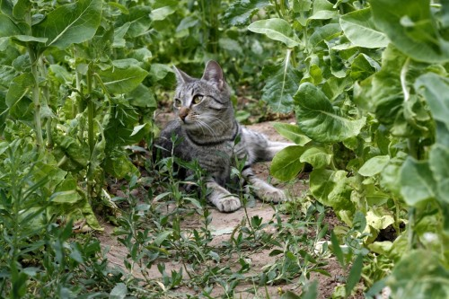 pisica in gradina