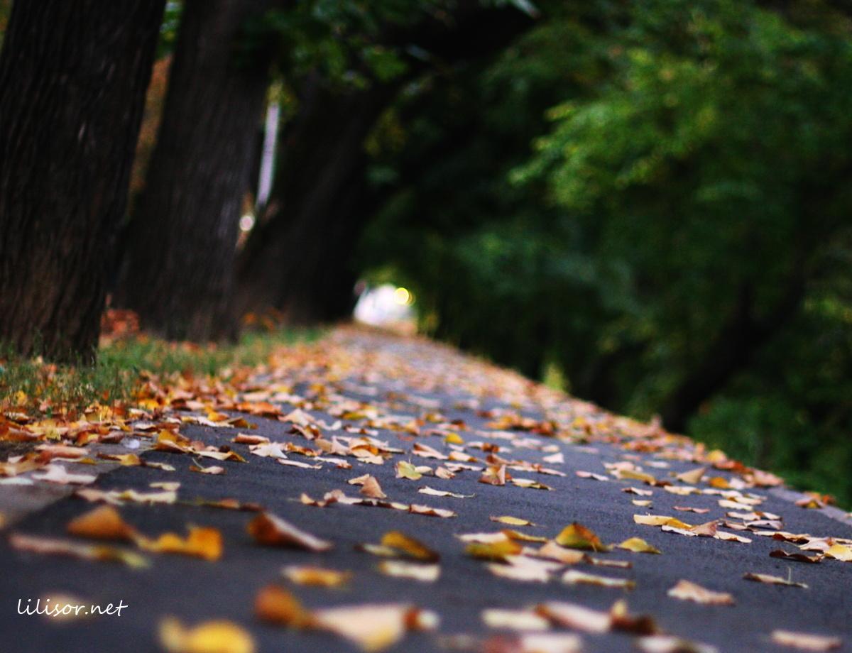 alee pustie acoperita de frunze aurii