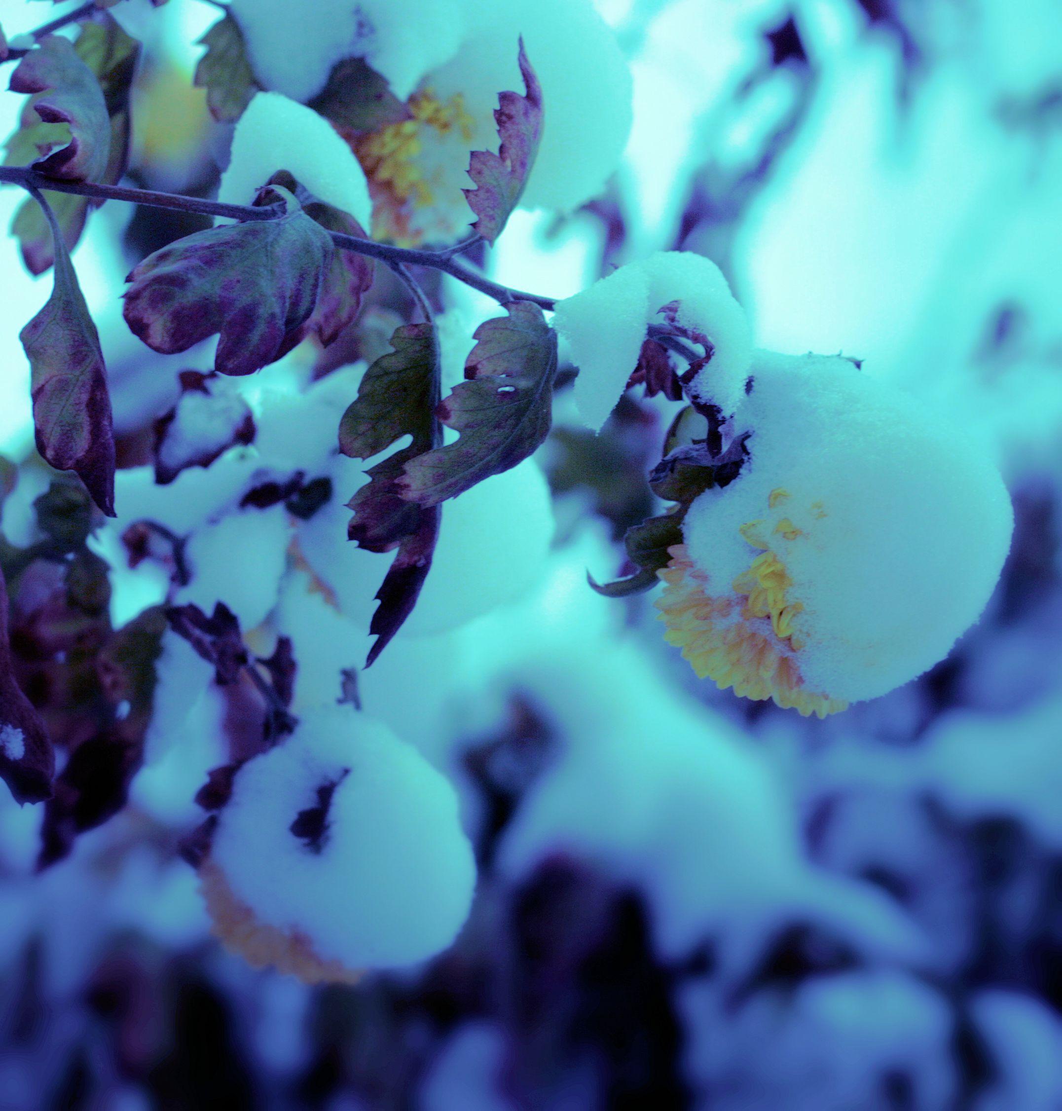floare in zapada