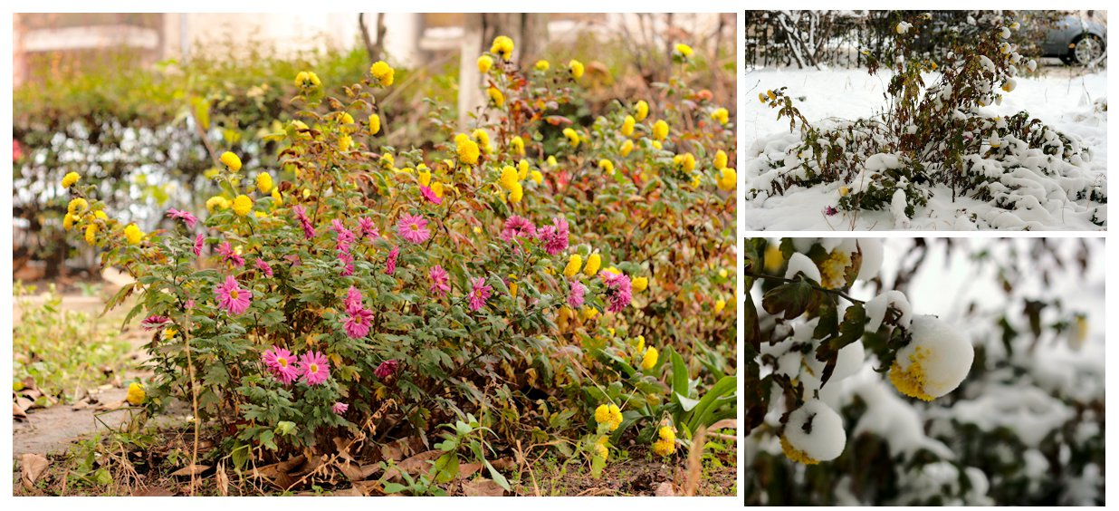 flori din gradina