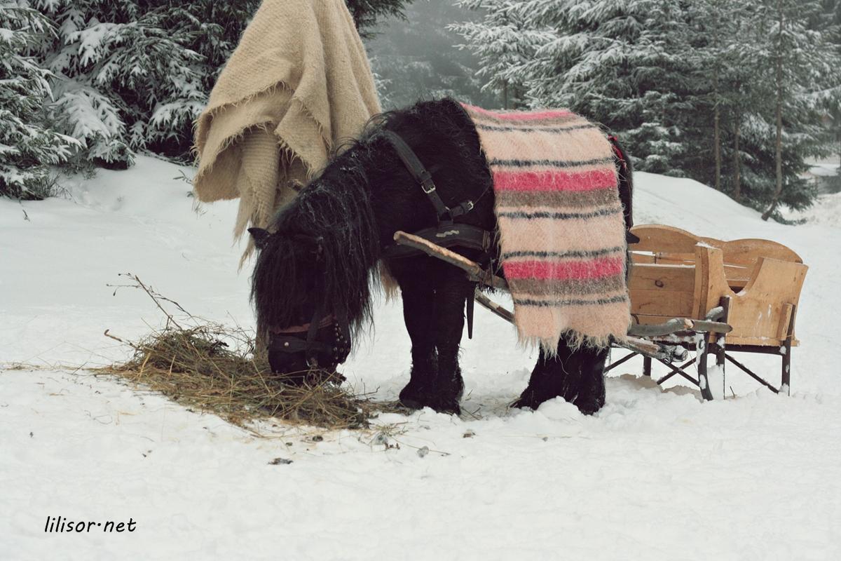 ponei cu sania