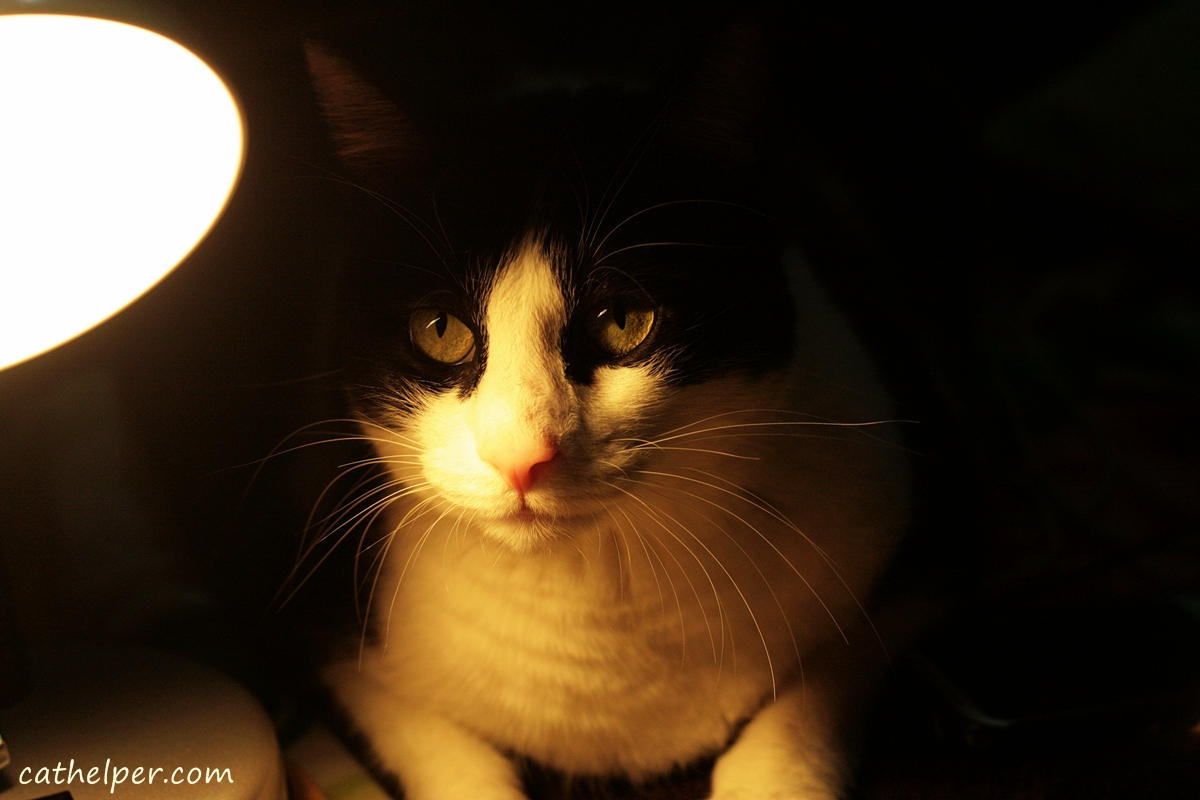 cat-in-light