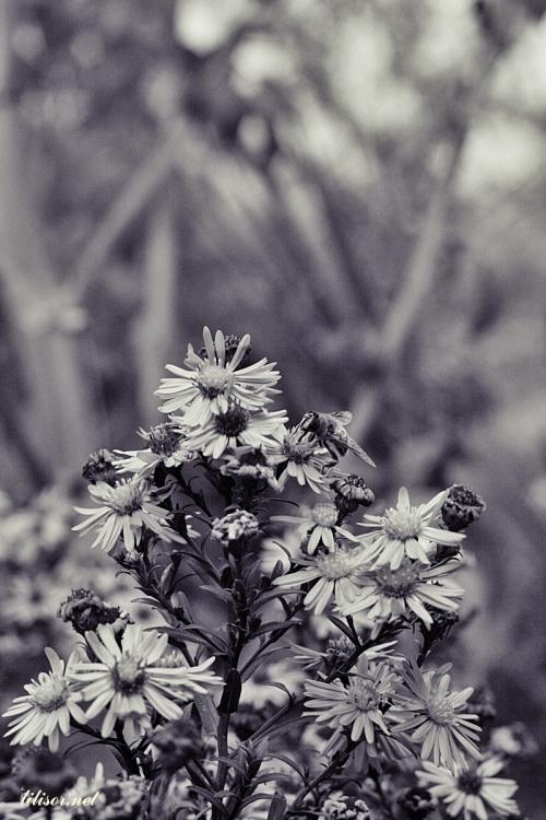 Prin_Bihor-2014_105