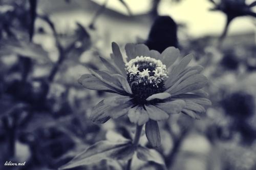 Prin_Bihor-2014_50