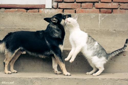 caine si pisica dragastosi