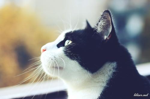 pisic