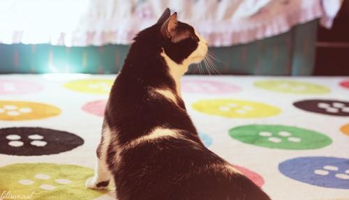 pisica-nebuna
